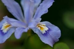 flower-3489